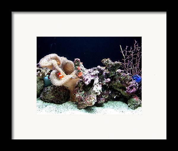 Fish Framed Print featuring the photograph Clown Fish Reef by Jess Thorsen