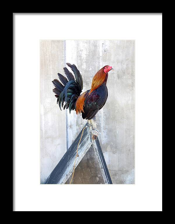 Photographer Framed Print featuring the photograph Cluck 4 by Jez C Self
