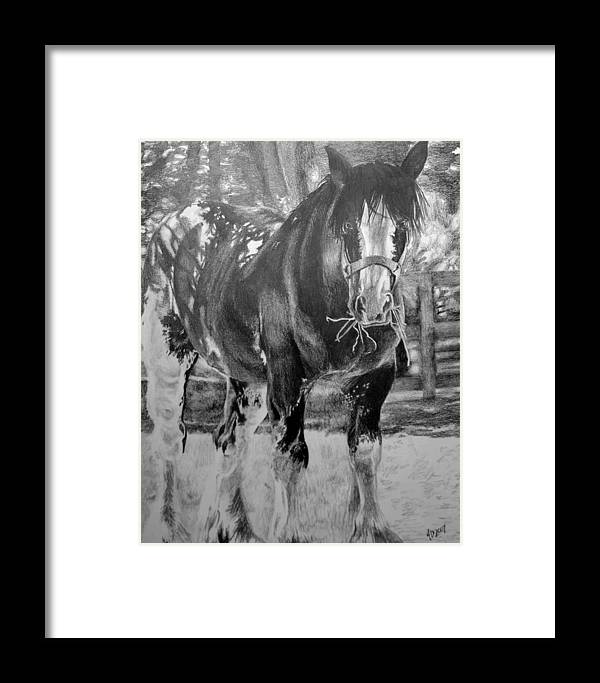 Horse Framed Print featuring the drawing Clydesdale by Darcie Duranceau