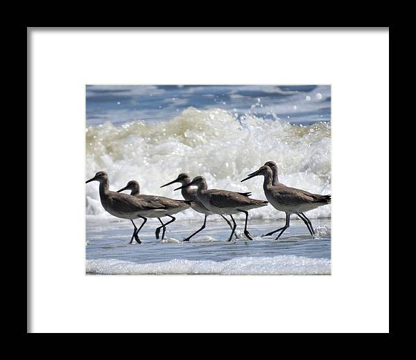 Coastal Framed Print featuring the photograph Coastal Togetherness by Jan Gelders