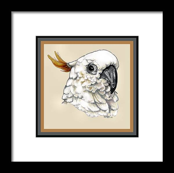 Cockatoo Framed Print featuring the drawing Cockatoo by Crystal Rolfe
