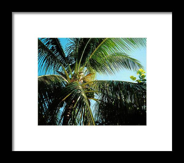Jamaica Framed Print featuring the photograph Coconut Tree by Debbie Levene