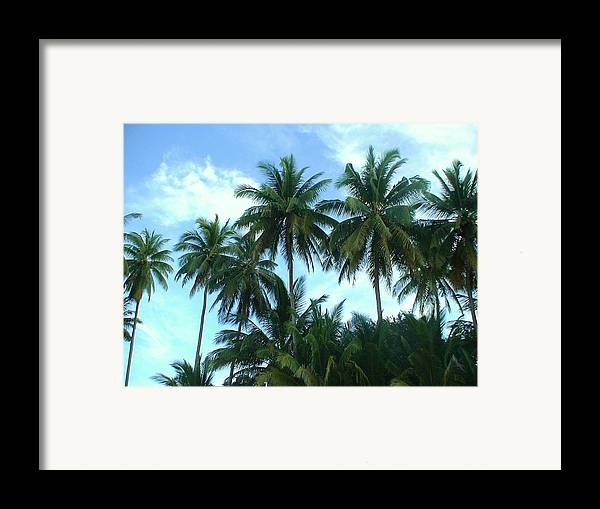 Coconut Framed Print featuring the photograph Coconut Trees by Nicholas Lim