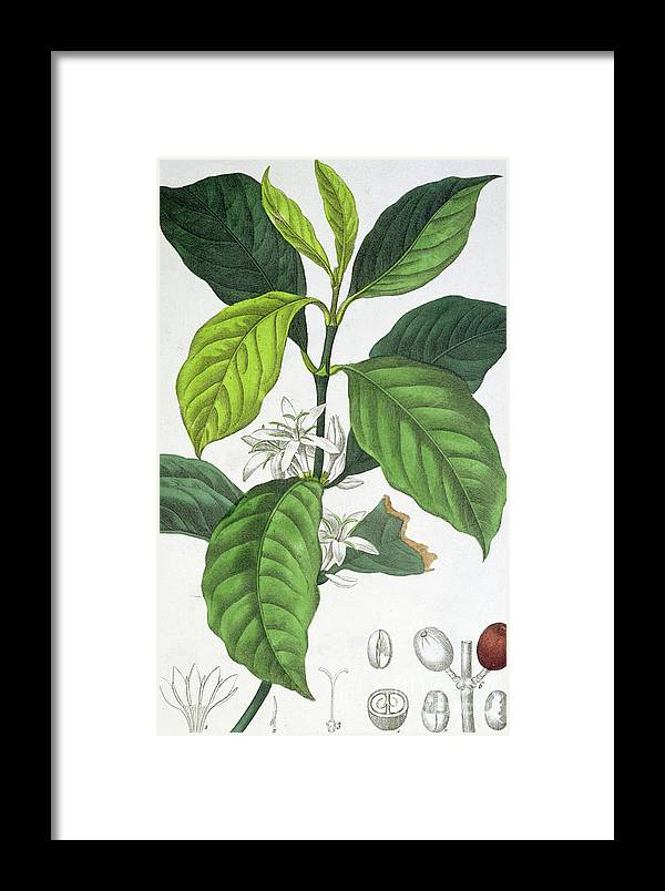 Coffee Framed Print featuring the painting Coffee by Maria Gabriel Cogniet