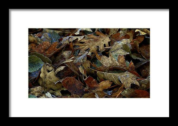 Landscape Framed Print featuring the photograph Cold Leaves by Ron Morales