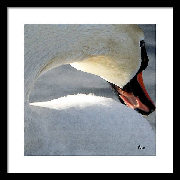 Swan Framed Print featuring the digital art Cold Shoulder by Tom Romeo