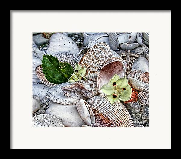 Seashells Seashore Tropical Beach Shells Framed Print featuring the photograph Collections by Carolyn Staut