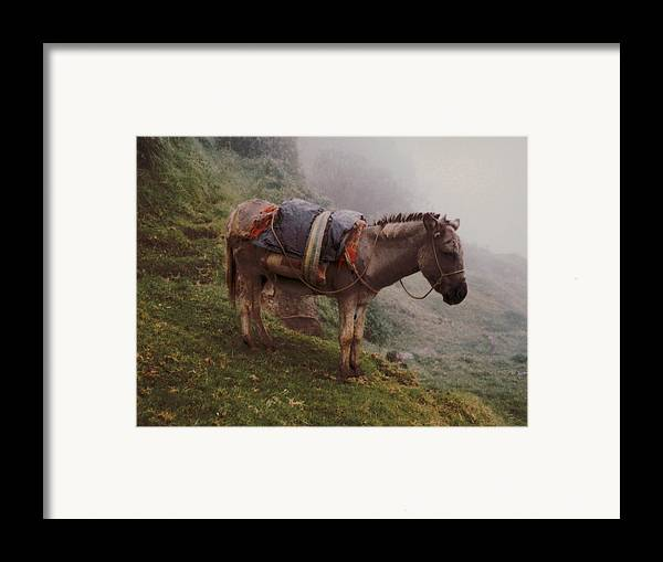 Donkey Framed Print featuring the photograph Colombian Burro In The Fog by Lawrence Costales