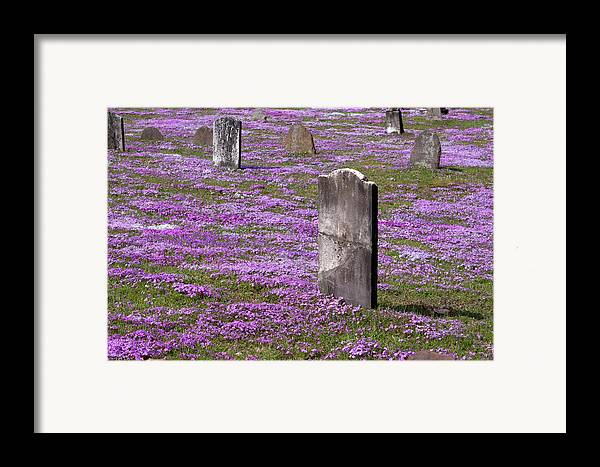 Tombstone Framed Print featuring the photograph Colonial Tombstones Amidst Graveyard Phlox by John Stephens
