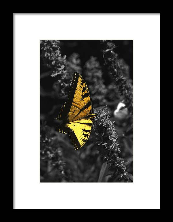 Black Framed Print featuring the photograph Color My World by Mandy Wiltse