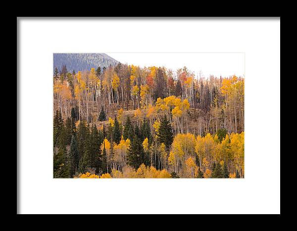 Trees Framed Print featuring the photograph Colorado Fall Foliage by James BO Insogna