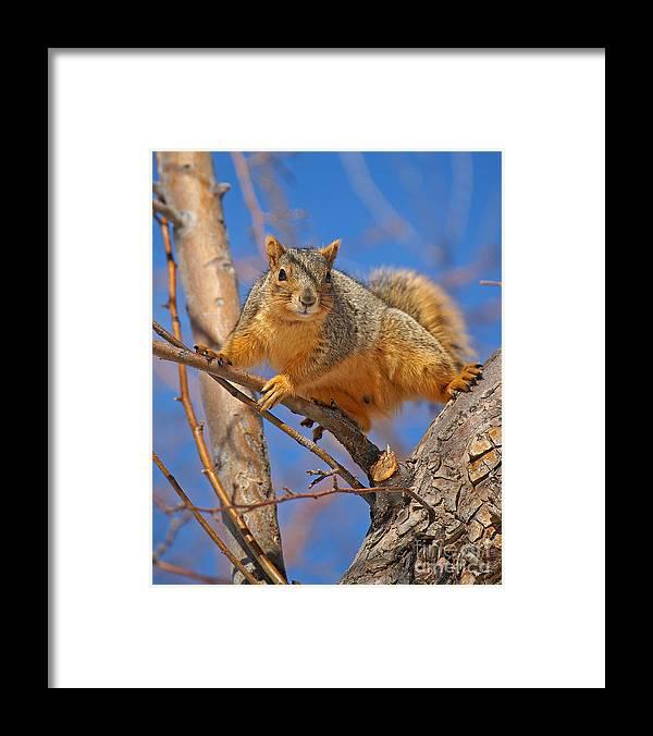 Colorado Framed Print featuring the photograph Colorado Squirrel Ninja by Jack Norton