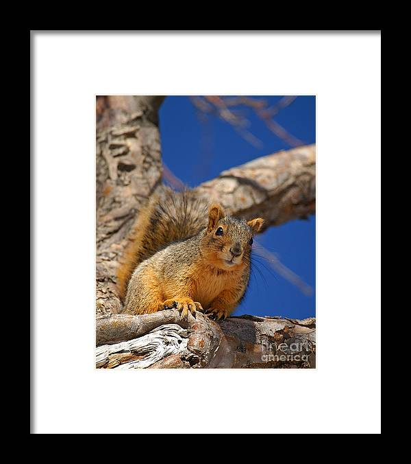 Colorado Framed Print featuring the photograph Colorado Squirrel Standoff by Jack Norton