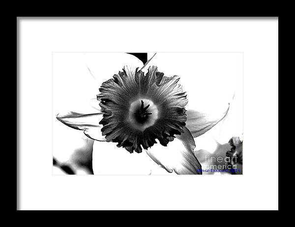 Bw black & White Modern Edge Daffodil Nature Bloom Flower Photograph Framed Print featuring the photograph ColorBlind. by Stevie Ellis