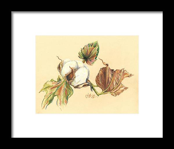 Graphite Pencil Drawing Framed Print featuring the drawing Colored Pencil Cotton Plant by Jacki Kellum