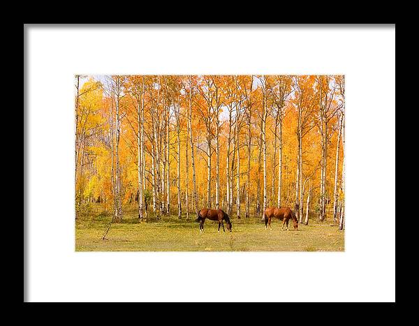 Country Framed Print featuring the photograph Colorful Autumn High Country Landscape by James BO Insogna