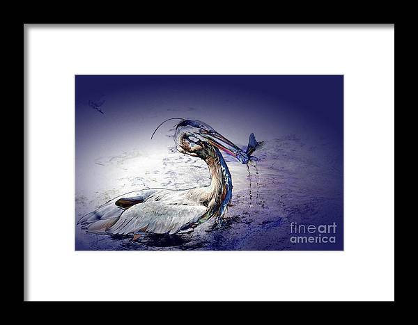 Heron Framed Print featuring the photograph Colorful Catch by Pamela Blizzard
