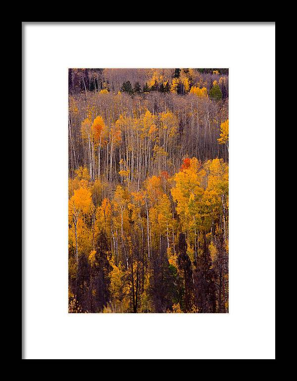 Vertical Framed Print featuring the photograph Colorful Colorado Autumn Landscape Vertical Image by James BO Insogna