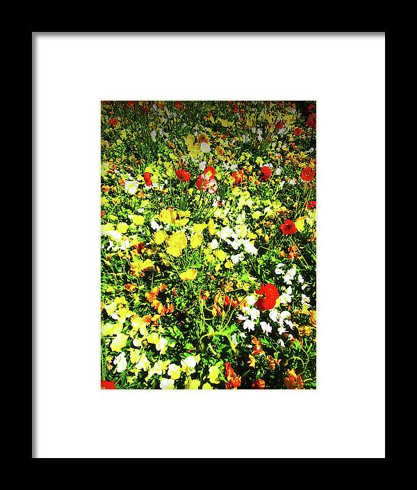 Flowers Framed Print featuring the photograph Colorful by Douglas Barnard