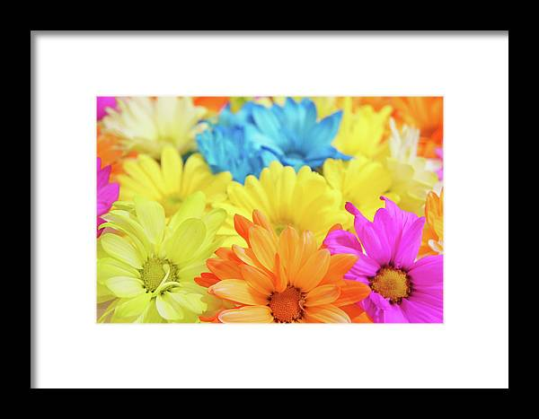 Color Framed Print featuring the photograph Flower Power by Art Spectrum