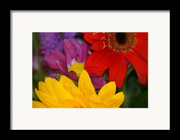 Flower Framed Print featuring the photograph Colorful Flowers by Liz Vernand