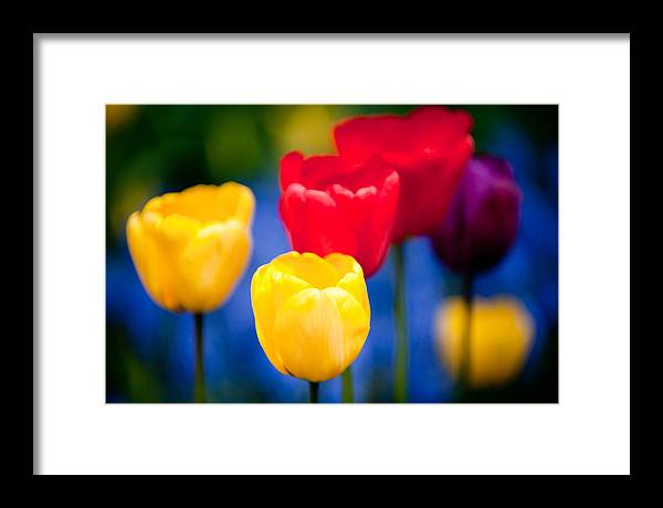 Flower Framed Print featuring the photograph Colorful L569 by Yoshiki Nakamura