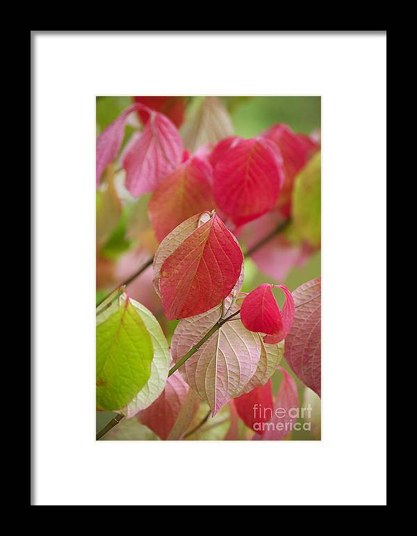 Leaf Framed Print featuring the photograph Colorful Leafs by Angela Doelling AD DESIGN Photo and PhotoArt