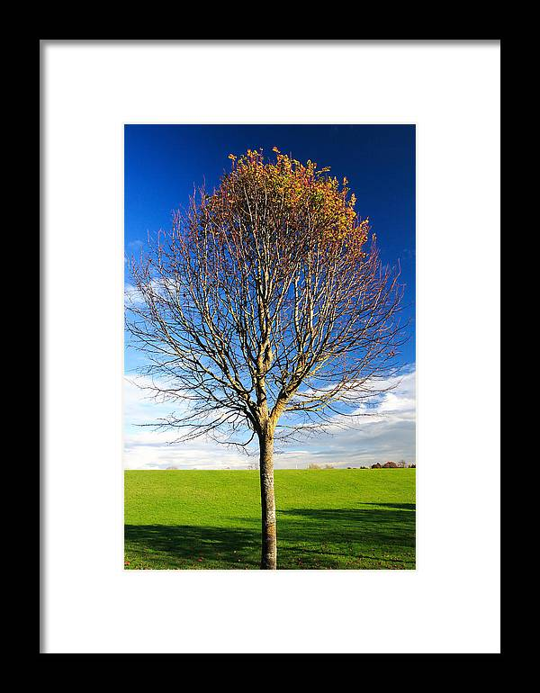 Tree Framed Print featuring the photograph Colorful Tree by Pierre Leclerc Photography