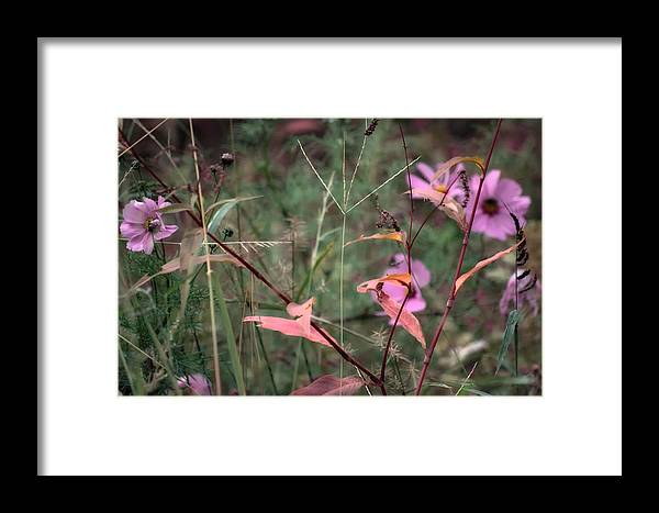 Flowers Framed Print featuring the photograph Colorization Of Autumn by Ross Powell