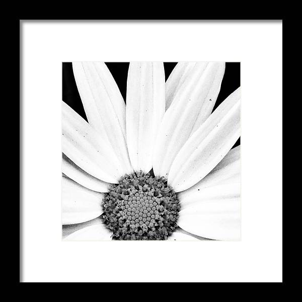 Framed Print featuring the photograph Colorless by Beth LaFata