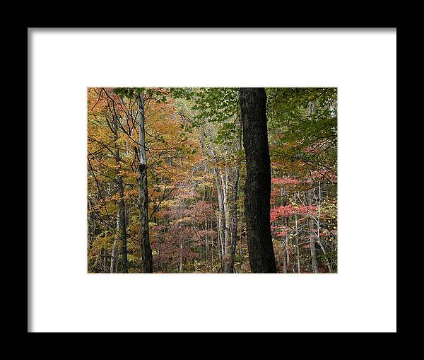 Fall Framed Print featuring the photograph Colors by Bj Hodges