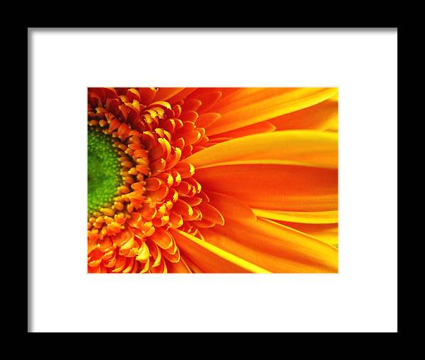 Red Framed Print featuring the photograph Colors Galore by Rhonda Barrett
