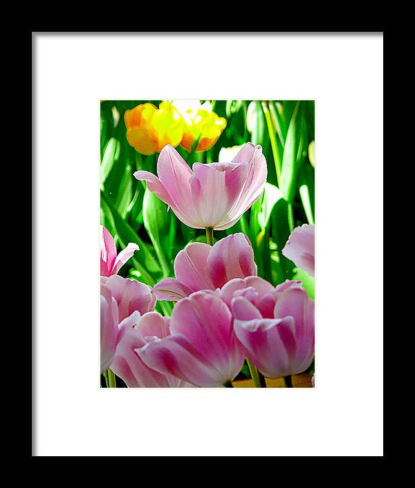 Color Framed Print featuring the photograph Colors Of Spring by Kevin Jackson