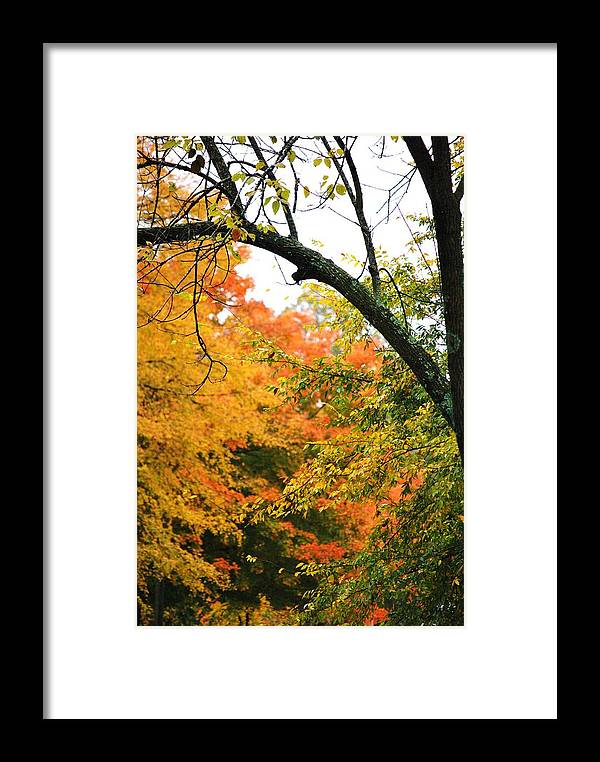 Trees Framed Print featuring the photograph Colors That I See by Trudi Southerland