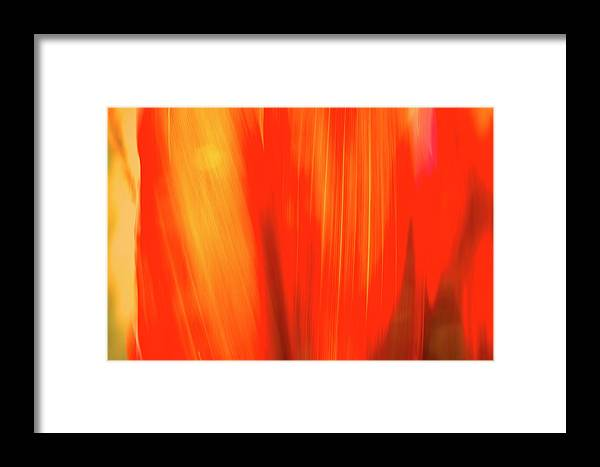 Plants Framed Print featuring the photograph Colours Of Cordyline by Gary Brinkman
