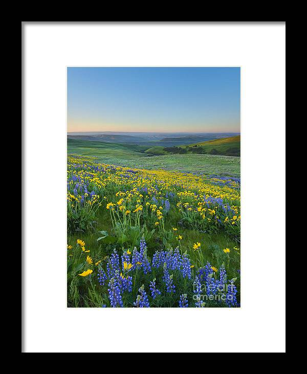 Columbia Hills Framed Print featuring the photograph Columbia Hills Wildflower Dawn by Mike Dawson