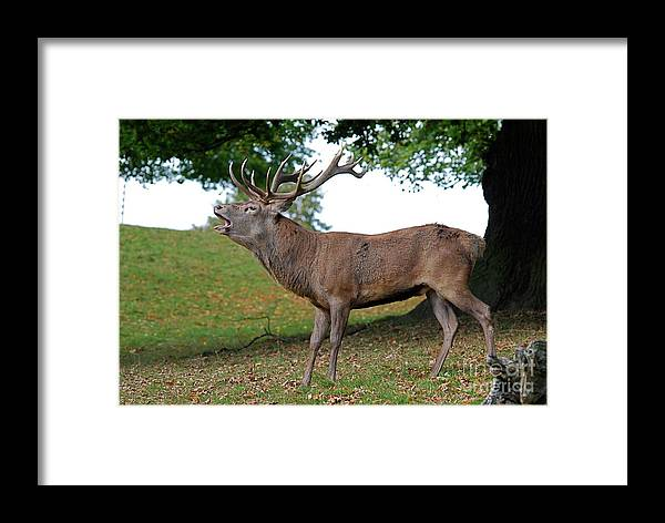 Doug Thwaites Framed Print featuring the photograph Come On Deer by Doug Thwaites