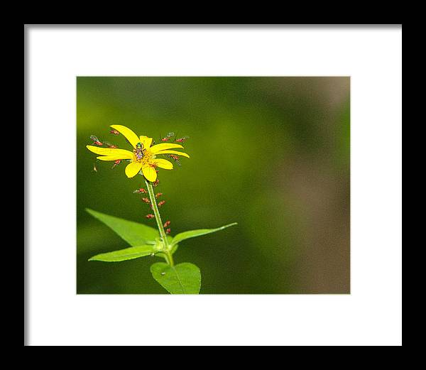 Flower Framed Print featuring the photograph Come One, Come All by Jessica Fronabarger