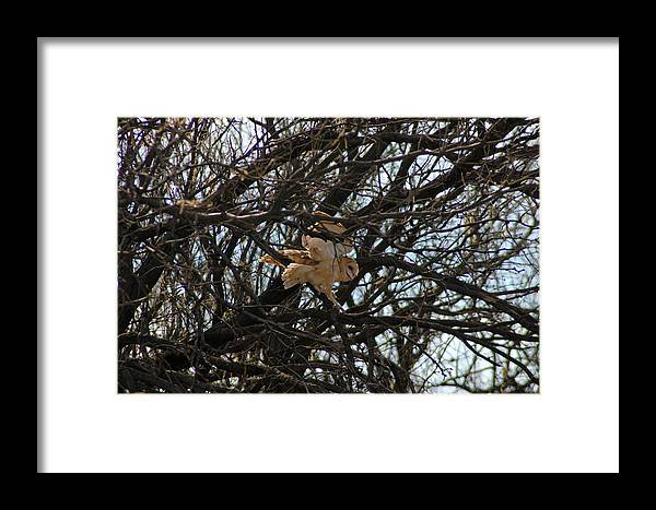 Large Framed Print featuring the photograph Coming In For A Landing by Teresa Stallings