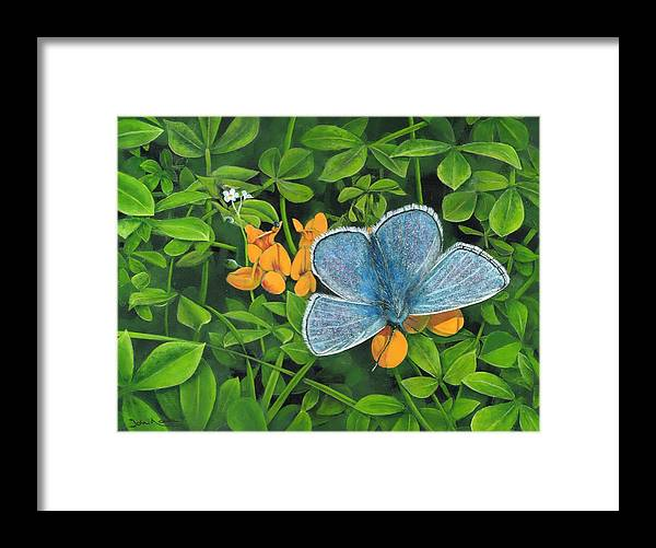 Common Blue Framed Print featuring the painting Common Blue On Bird's-foot Trefoil by John Neeve