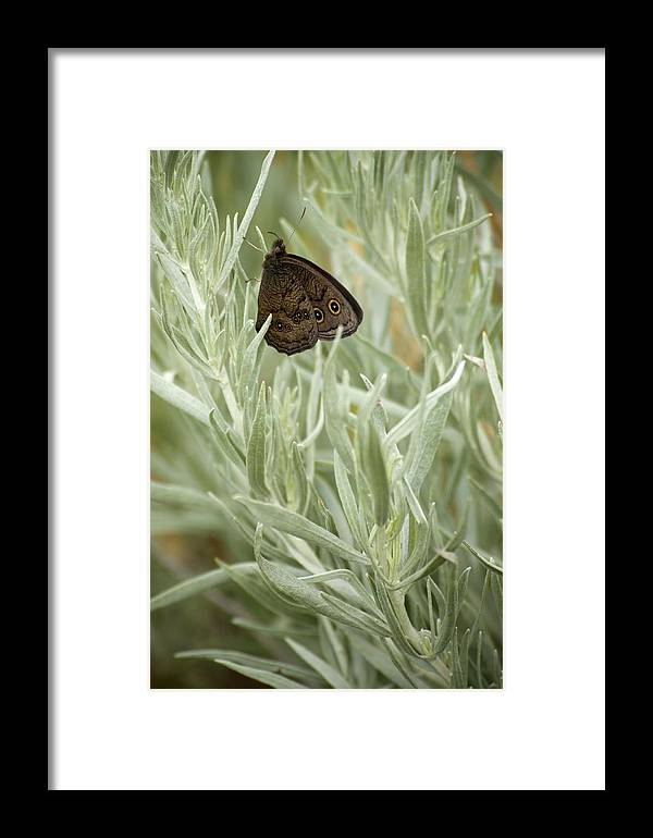 Butterfly Framed Print featuring the photograph Common Wood Nymph by Chad Davis