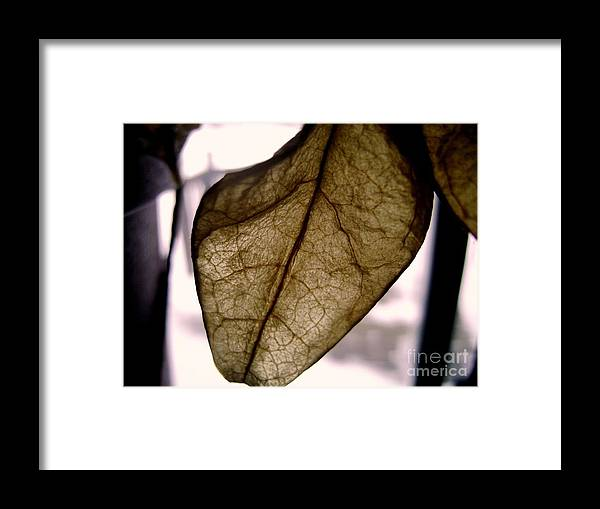 Leaf Framed Print featuring the photograph Complexity by Dj Ewing