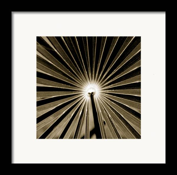Beauty Flower Framed Print featuring the painting Concentric by Son Of the Moon