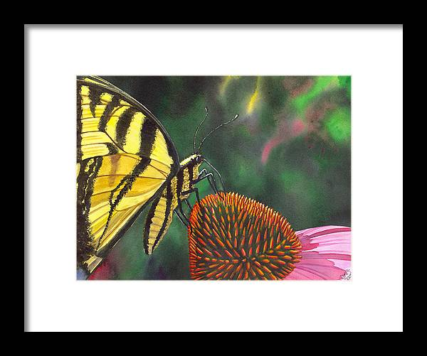 Butterfly Framed Print featuring the painting Cone Flower by Catherine G McElroy