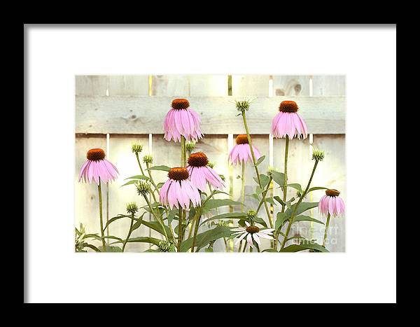 Flower Garden Framed Print featuring the photograph Coneflower Patch by Steve Augustin