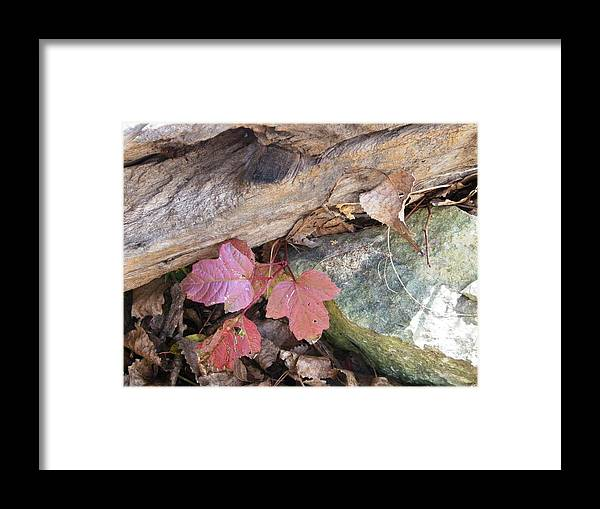 Nature Framed Print featuring the photograph Congruence by Peggy King