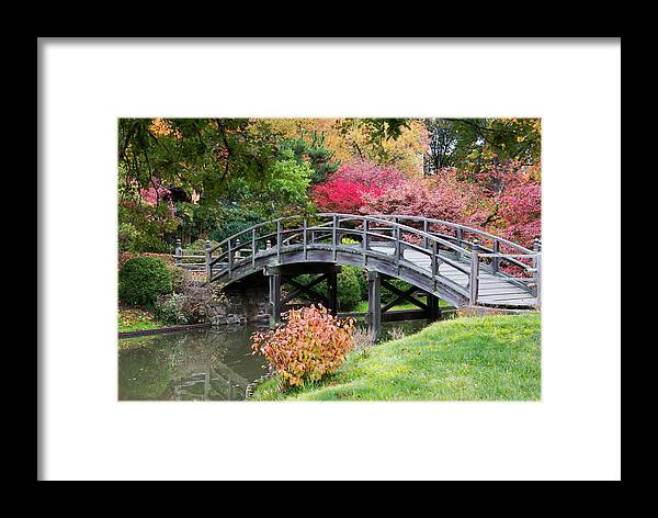Nature Framed Print featuring the photograph Connections by Darlene Bushue