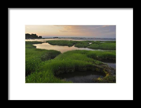 Conomo Point Framed Print featuring the photograph Conomo Point Marsh Grass by Michael Dyer