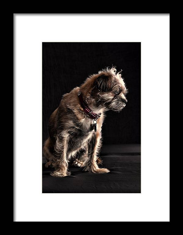 Dog Framed Print featuring the photograph Contemplation by Monte Arnold