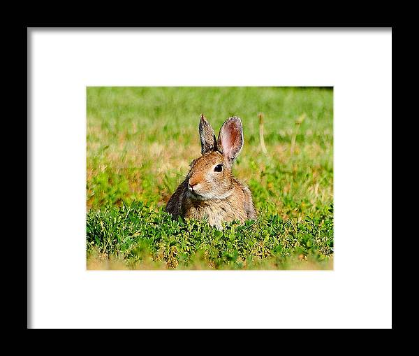 July16 Framed Print featuring the photograph Content by Blair Wainman